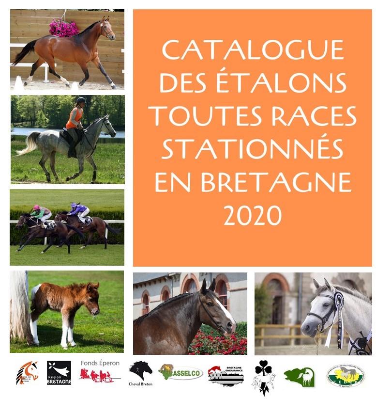 Le catalogue en ligne des étalons toutes races stationnés en Bretagne
