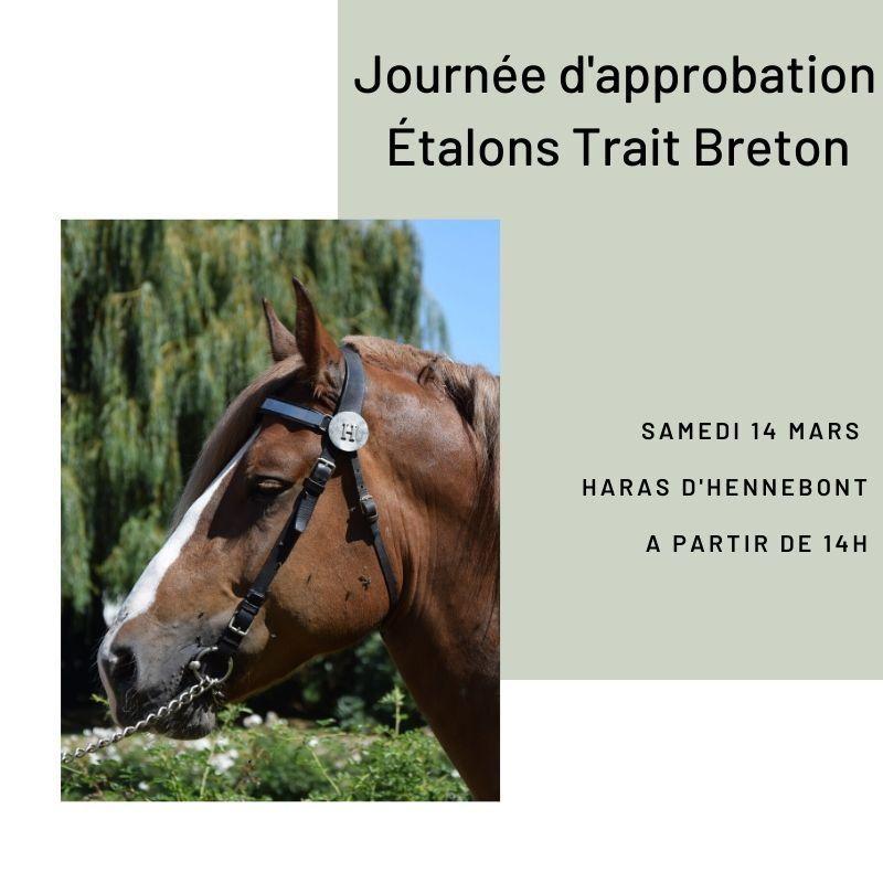 Approbation Etalons Trait Breton - Haras d'Hennebont