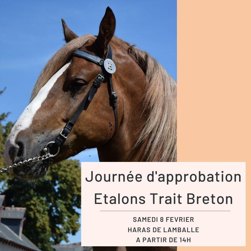 Approbation Etalons Trait Breton - Haras de Lamballe