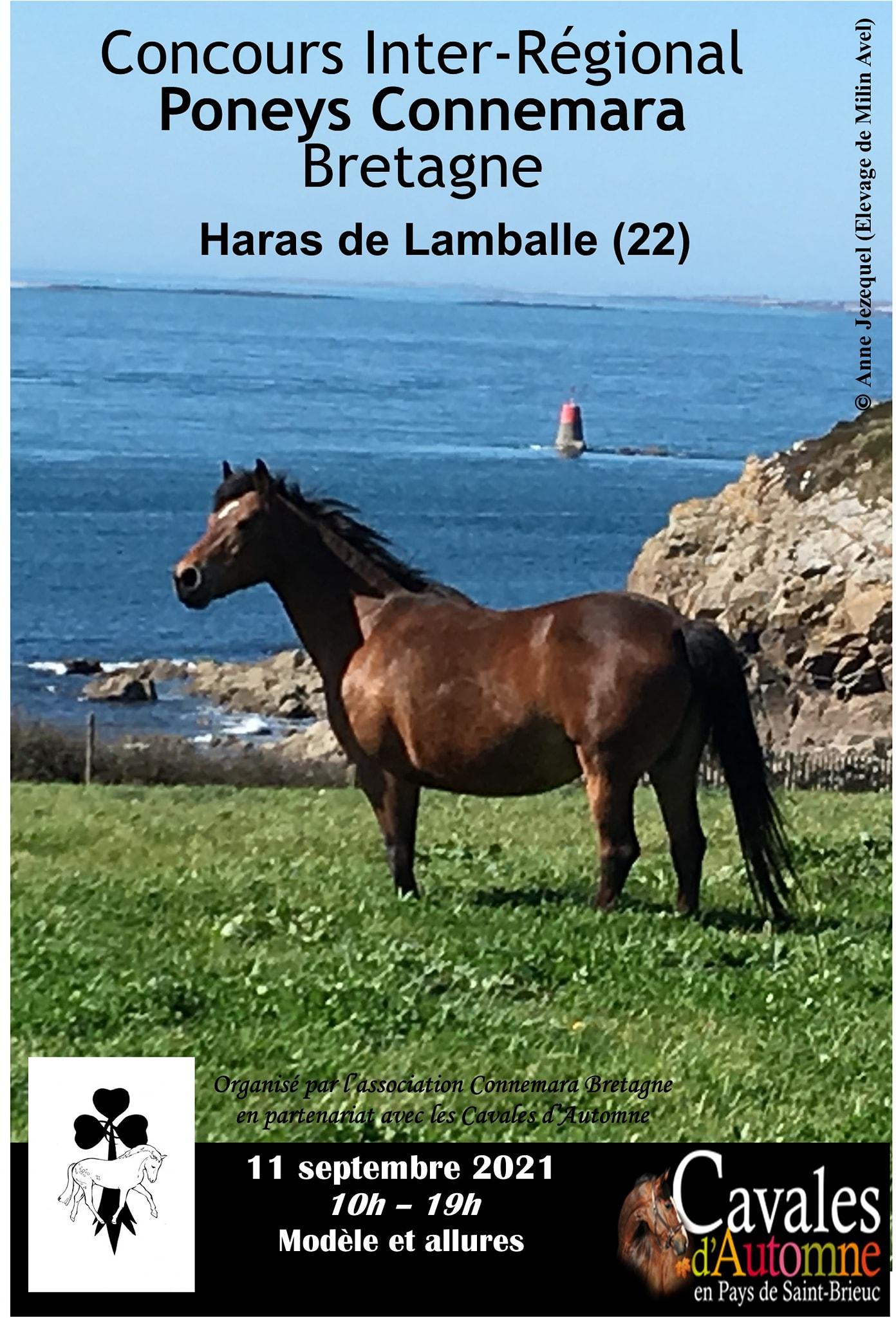 Concours inter régional Connemara Breton