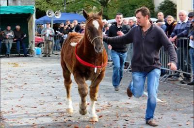 Foire aux chevaux à l'ancienne à Carhaix-Plouguer
