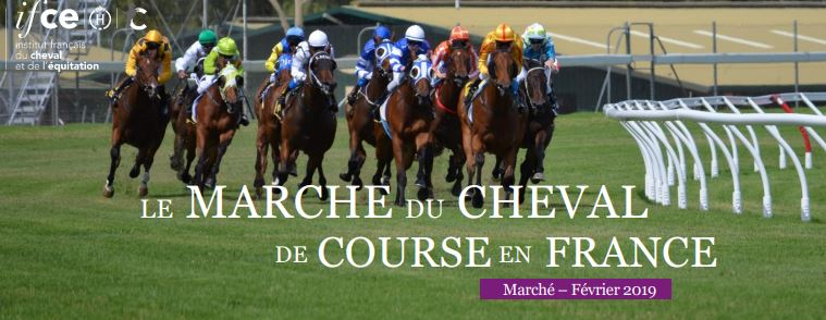 Note IFCE : Le marché du cheval de course en France
