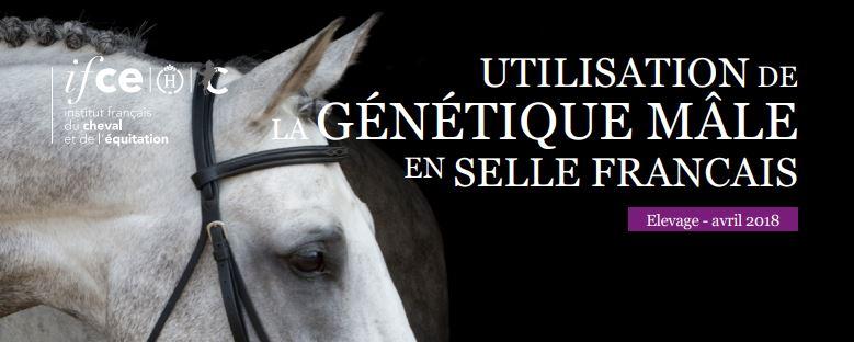 Nouvelle note de l'OESC : Quelle est l'évolution de l'utilisation de la génétique mâle en Selle français ?