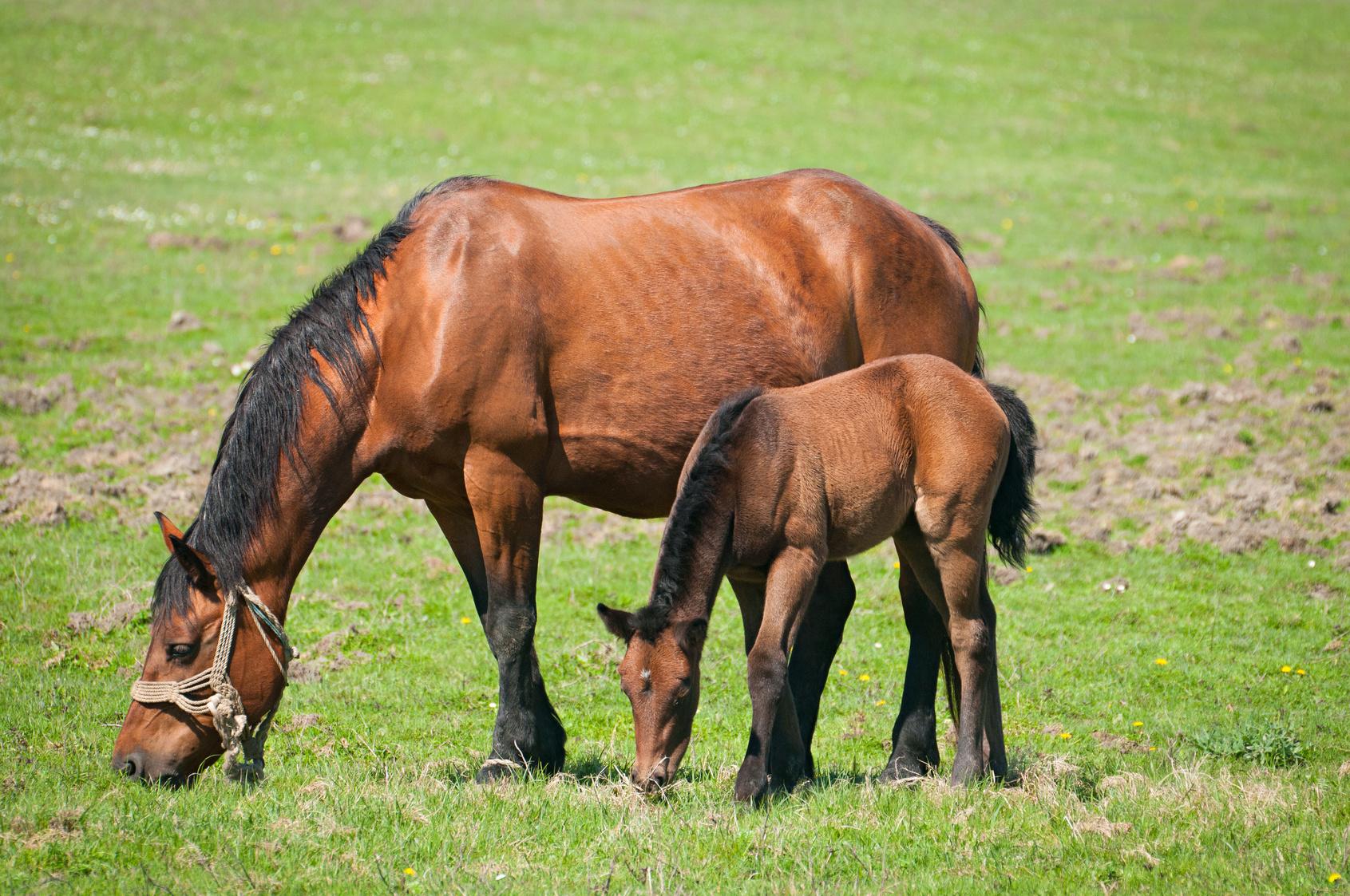 Equi-patûre : Comment valoriser l'herbe dans l'alimentation du cheval et pratiquer une vermifugation raisonnée