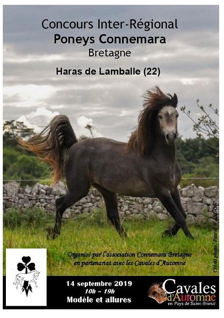 Concours Inter-régional Connemara au Haras national de Lamballe