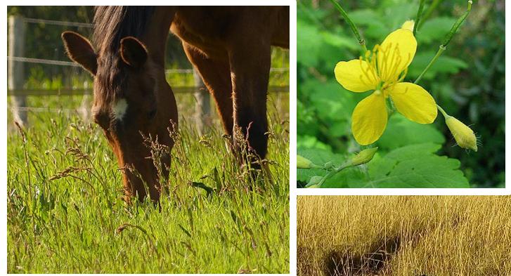 """Formation """"Apprenez à reconnaitre les plantes toxiques pour le cheval"""" à Allineuc(22)"""